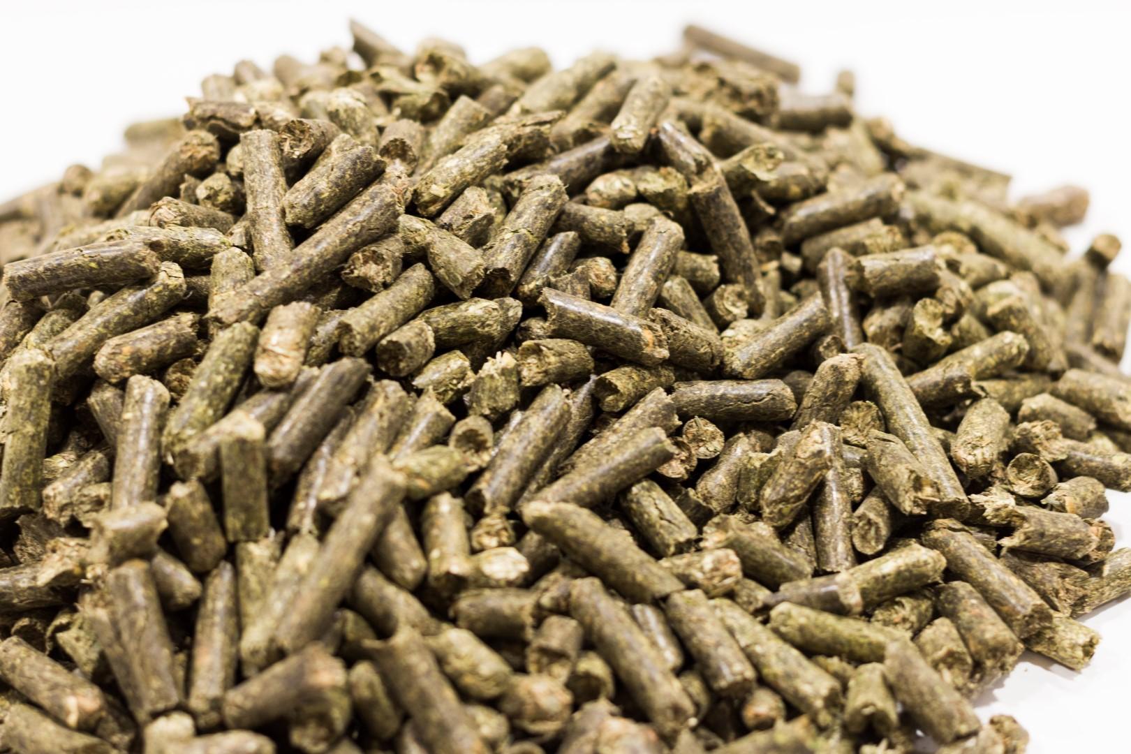 Piensos Bograo - Alfalfa